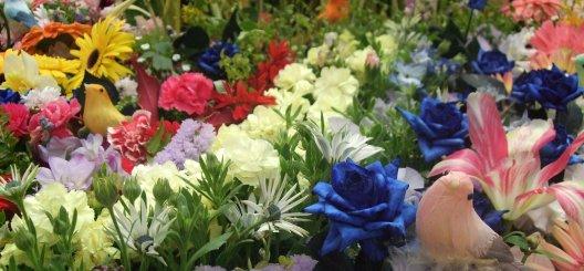 Šesť tipov pre krásnu jarnú záhradu